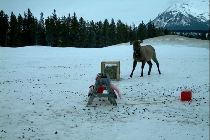 Elk -strange -object _2015_07_22