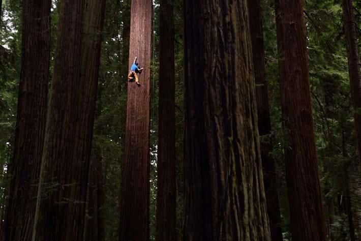 Chris Sharma Redwood Ascent 6 2015 07 22