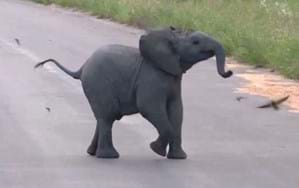 WATCH: Adorable baby elephant spins in circles chasing after birds