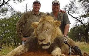 Cecil is dead. Can we save lions like him from an onslaught of threats?