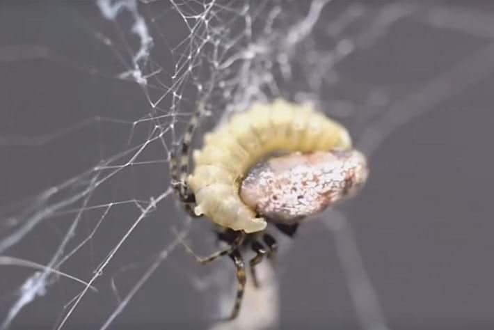 Spider zombie 2015-08-06
