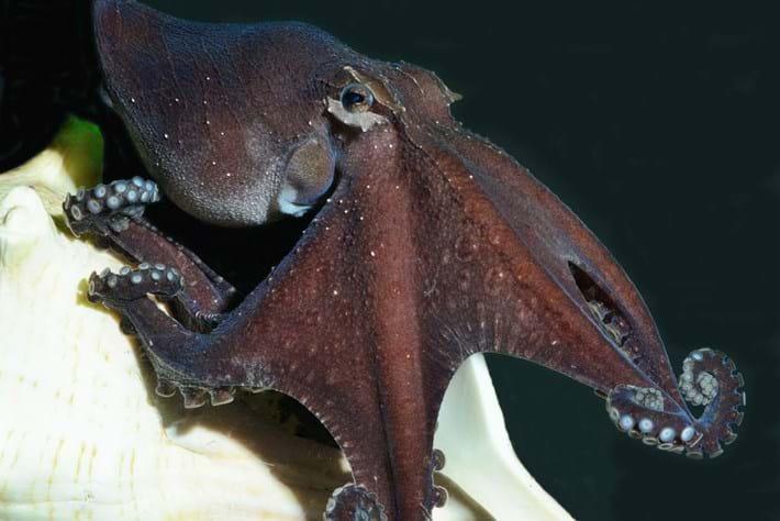 octopus-header-2015-8-12