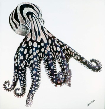 octopus-drawing-2015-8-11