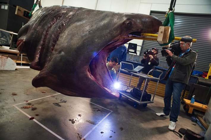 3D scans take us inside a 7.2-metre shark