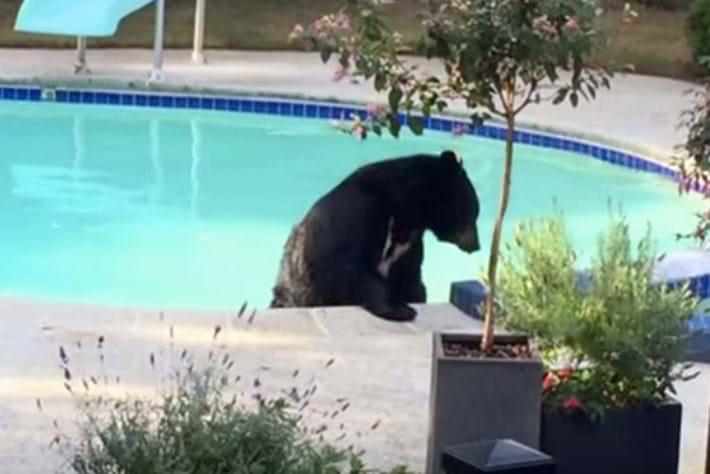 bear pool-2015-8-19