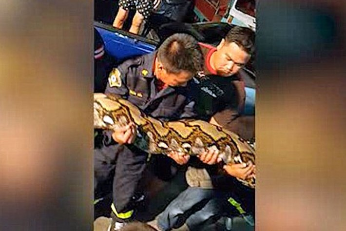 Python -firemen _2015_08_20