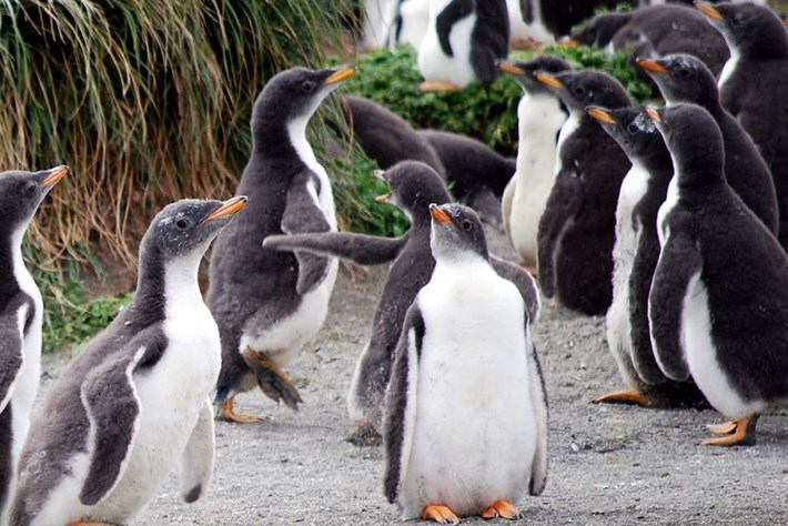 Penguin -page _2015_08_26