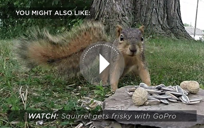 squirrel frisky_related content_2015_08_28