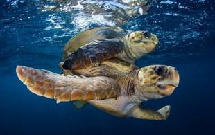 World Turtle Day 2013