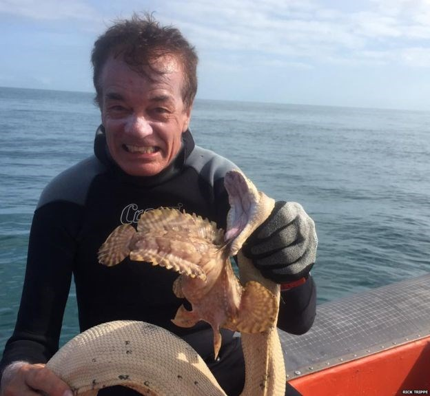 Sea Snake Stonefish 1 2015 09 01