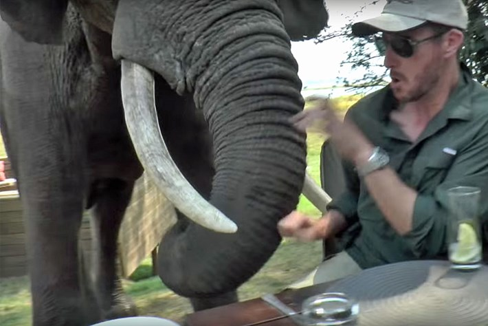 elephant swipes tourists Mana Pools Zimbabwe 2015-09-07