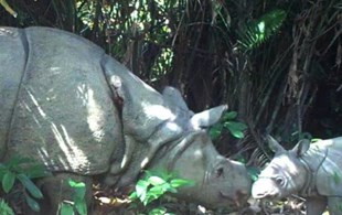 World's rarest baby rhinos bring hope in new footage