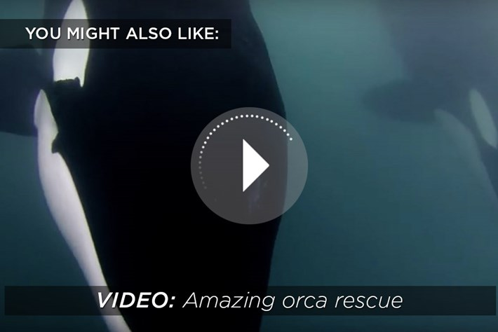 orca rescue-related-2015-9-7