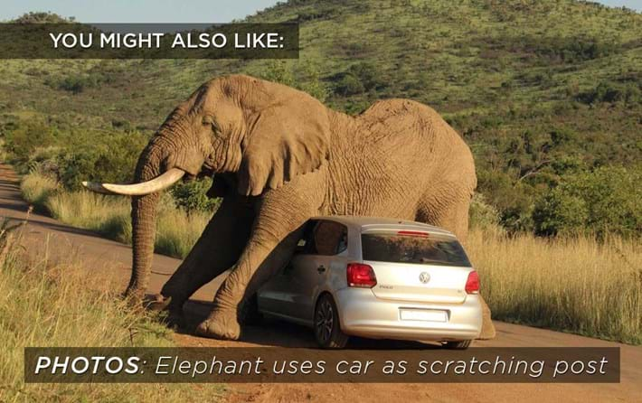 Elephant Car Scratch Related Content 2015 09 15
