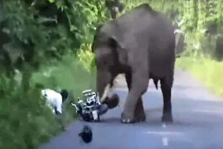 Elephant charge 2015-09-15