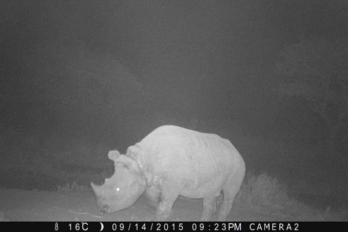 Bahati _rhino _search _2015_09_18