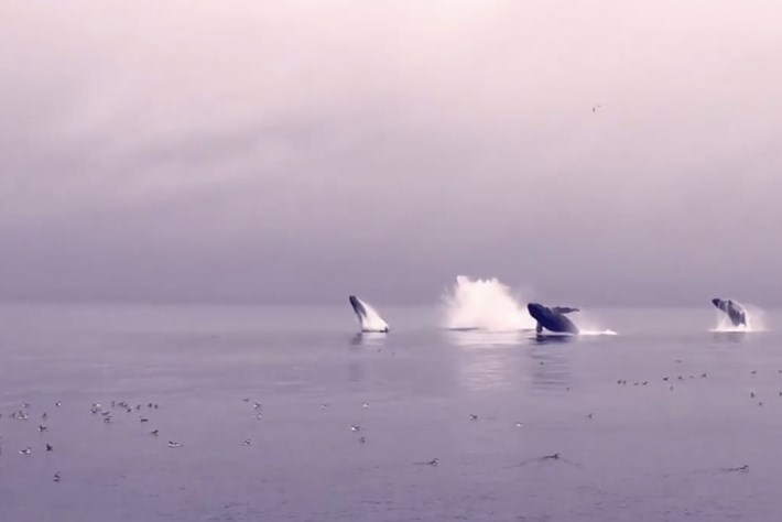5 whales-page-2015-9-22