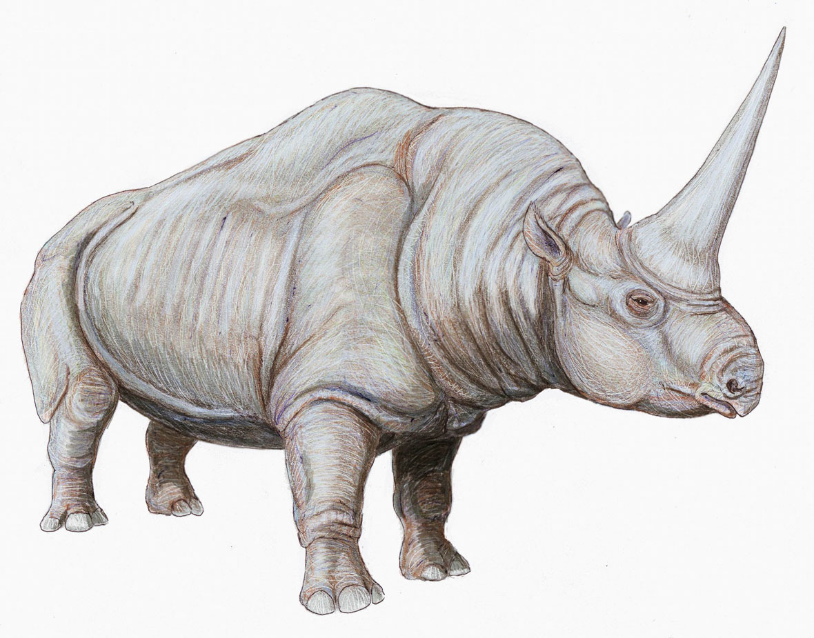 Here's a line-up of prehistoric beasts from the rhino ...