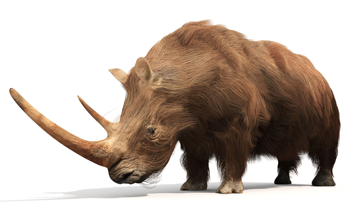 Here S A Line Up Of Prehistoric Beasts From The Rhino Family Tree Evolution Earth Touch News