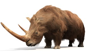 Here's a line-up of prehistoric beasts from the rhino family tree