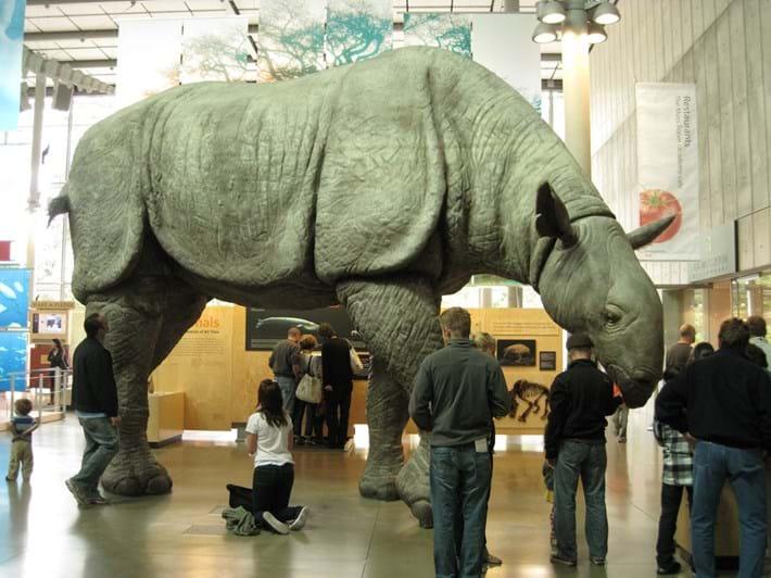 Paraceratherium Rhino 2015 09 22