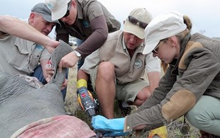 World Rhino Day: A tribute to the wildlife warriors on the frontlines (WATCH)
