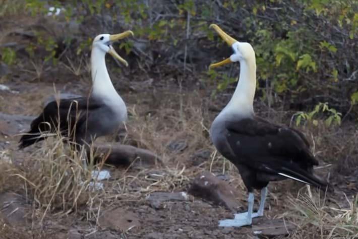 albatrosses-page-2015-9-23