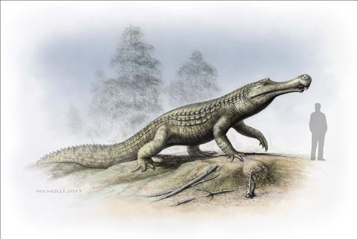 Scientists scrutinise thousands of fossils to predict the future of crocodiles
