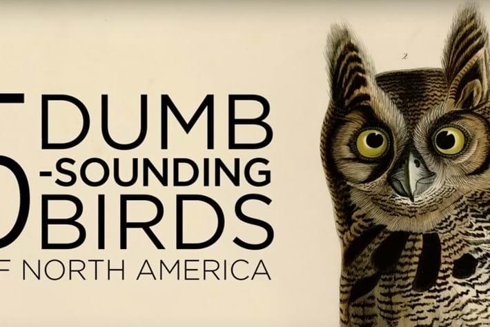 funny birds-page-2015-9-25