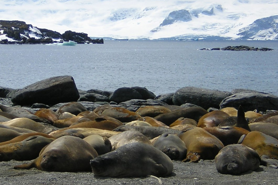 Elephant seals glaciers