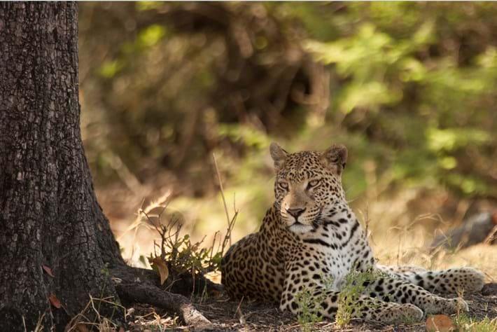 2013 09 05 Leopard Camp Inspector 01