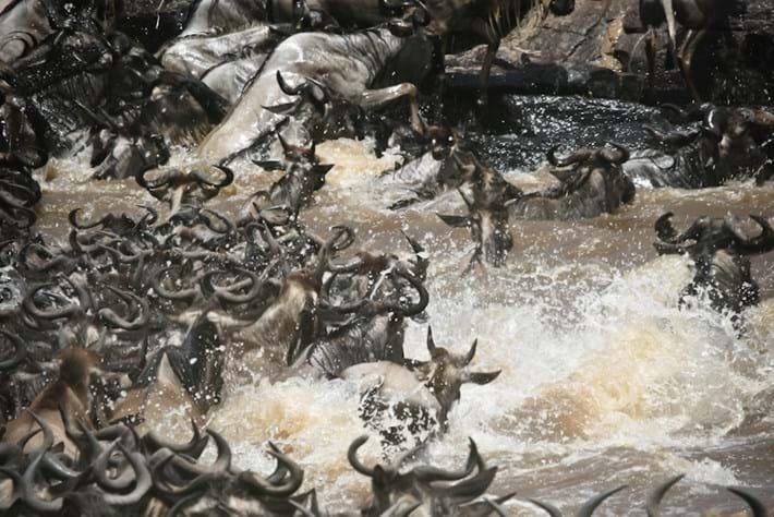 Wildebeest migration_2015_10_03