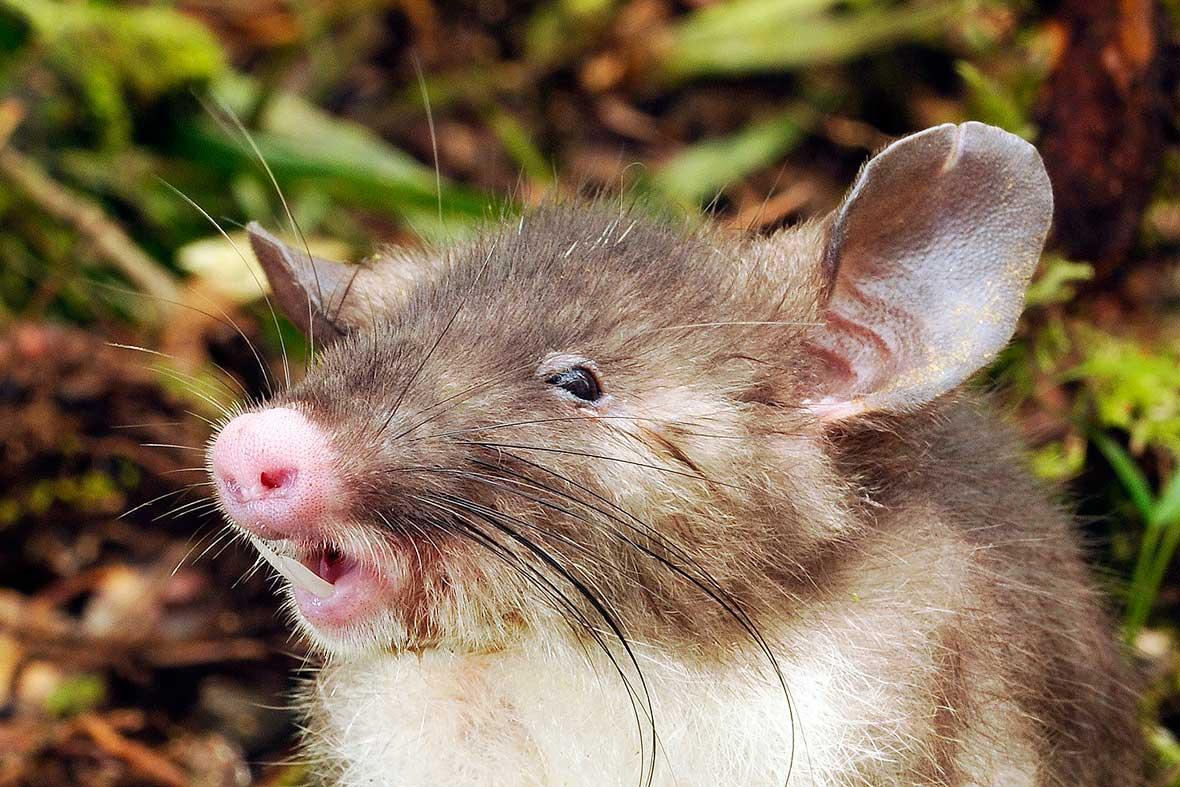 10 + 1 Increíbles animales descubiertos en 2015