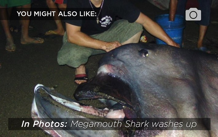 megamouth-related-2015-10-5