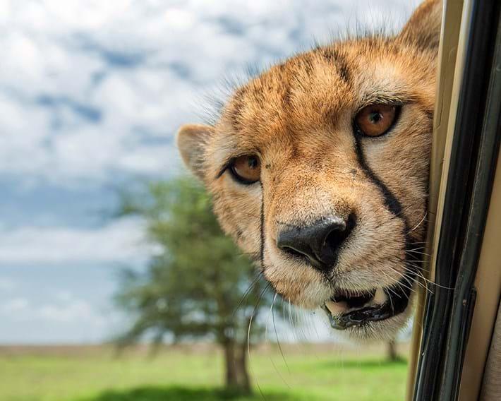 Marc Mol 2 Cheetah 2015 10 08