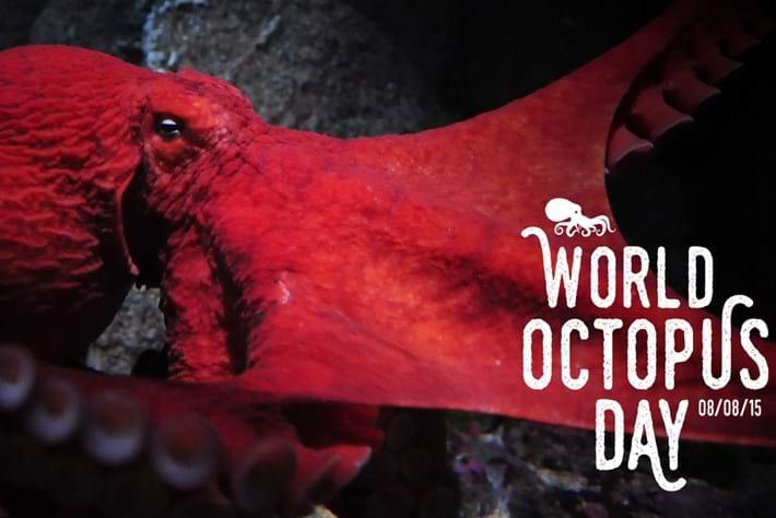 World Octopus Day 2015-10-08