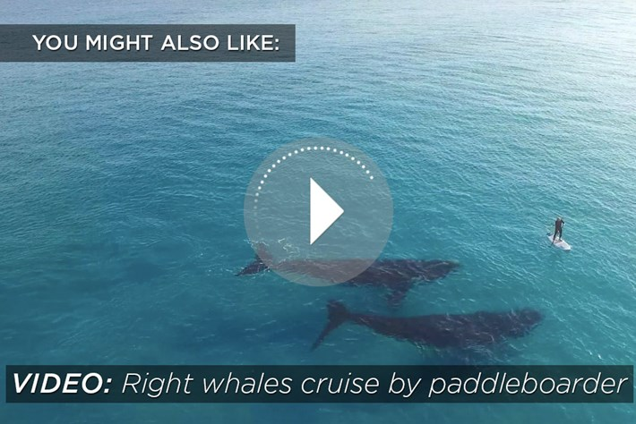 right whale-related-2015-10-14