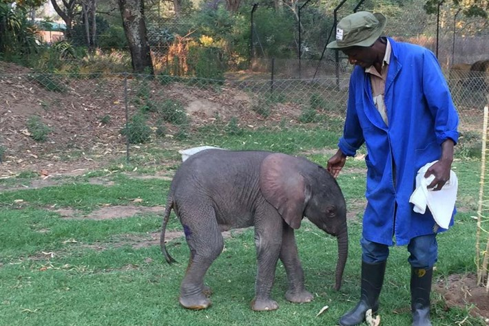 Baby Elephant Rescued 6 2015 10 20