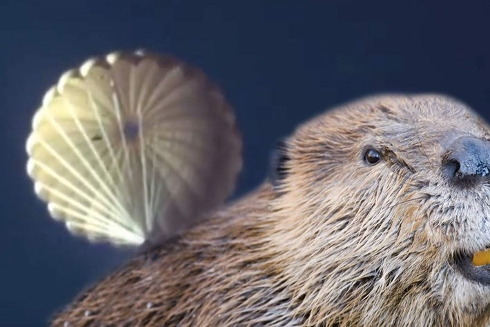beaver-page-2015-10-22