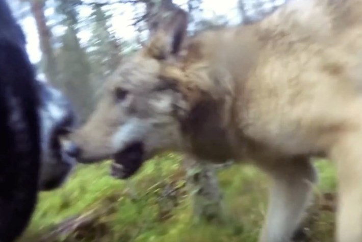 wolf attack-page-2015-10-22
