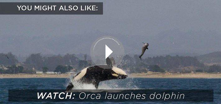 Orca Launches Dolphin 2015 10 26