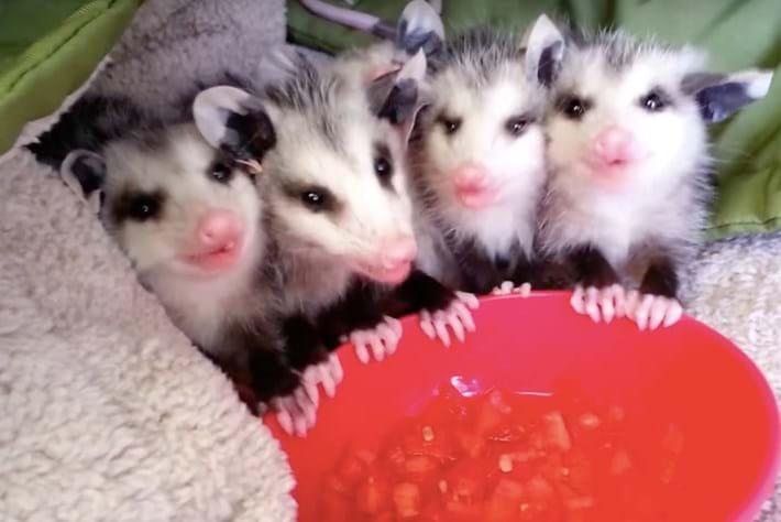 opossum-page-2015-10-26