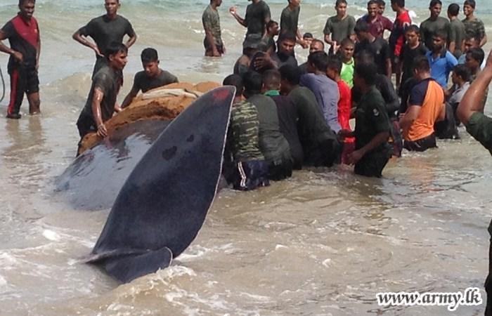 Sri Lanka Whale Rescue 2 2015 10 30