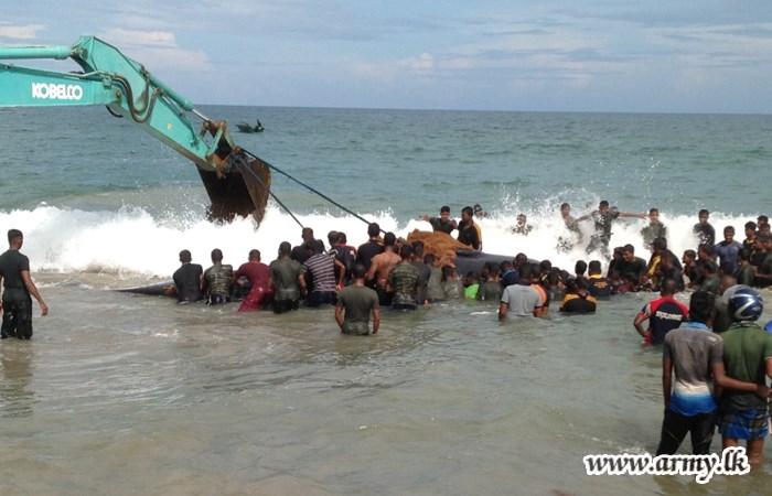 Sri Lanka Whale Rescue 4 2015 10 30