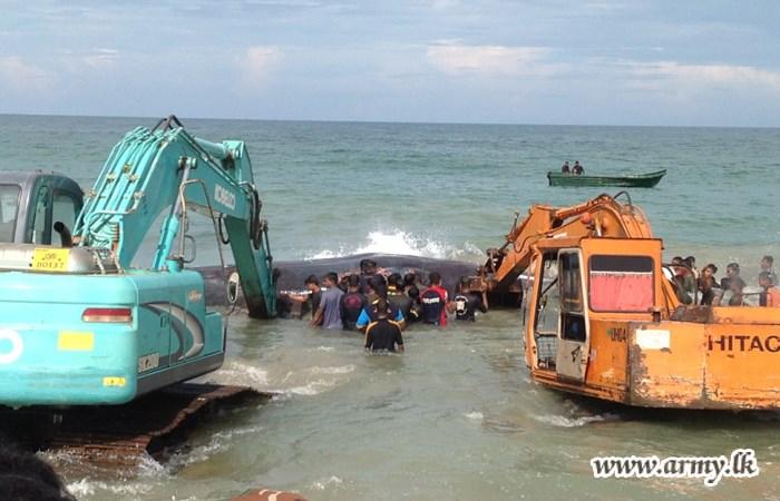 Sri Lanka Whale Rescue 5 2015 10 30