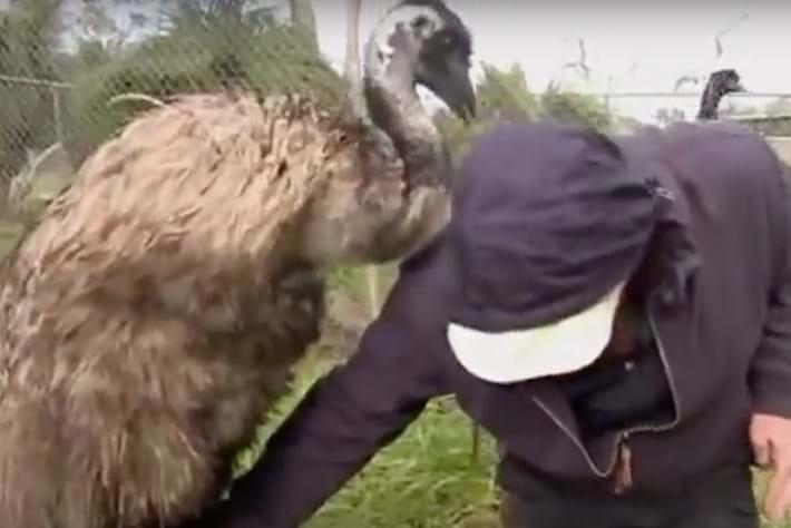 emu-page-2015-11-2