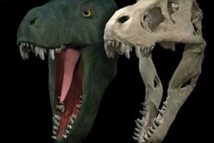 T -rex -jaw -gape _page _2015_11_05