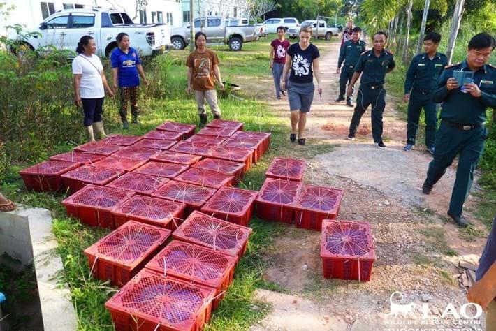 Pangolin Bust Laos 1 2015 11 06