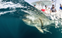 You can now track two new shark 'celebrities' in real time