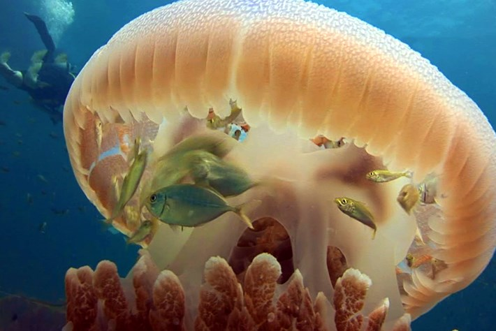 jelly-page-2015-11-20